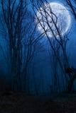 Mörk nattskog Arkivbild