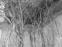 Mörk natur Arkivfoto