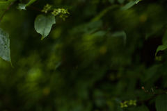 Mörk naturlig grön suddig bakgrund Arkivfoton