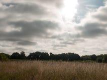 Mörk och dyster gryning i ett fält Royaltyfri Foto