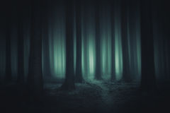 Mörk och läskig skog fotografering för bildbyråer