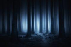 mörk och läskig skog på natten royaltyfria foton