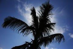 Mörk palmträd mot solen på blå himmel Royaltyfri Foto