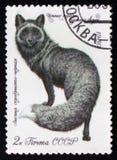 Mörk silverräv från de seriePäls-lager djuren, circa 1980 Royaltyfri Bild