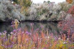 Mörk sjö bak att bedöva purpurfärgade blommor Arkivfoton