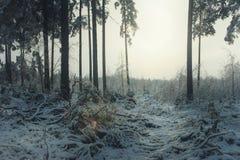 mörk skog Royaltyfria Foton