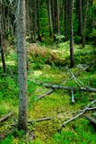 mörk skog Arkivbilder