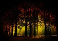 mörk skog Royaltyfri Fotografi