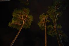 mörk skog arkivbild
