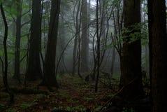 mörk skog royaltyfria bilder