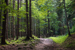 mörk skog Arkivfoto