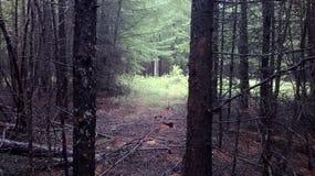 mörk skog Arkivfoton