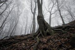 mörk skog fryst tree arkivfoto