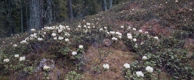 Mörk skog i Sibirien Royaltyfri Foto