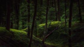 Mörk skog med ett handlag av ljus royaltyfria foton
