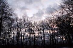 Mörk skog på det Fruska goraberget arkivbilder