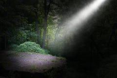 Mörk skog, stråle av ljusbakgrund arkivbilder