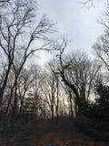 Mörk skog, träd Natur av hösten Fotografering för Bildbyråer
