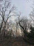 Mörk skog, träd Natur av hösten Arkivfoto