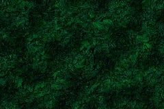 Mörk skogbakgrund för abstrakt konst Royaltyfri Fotografi