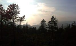 Mörk skogsikt Fotografering för Bildbyråer