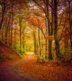 Mörk skogväg i höstskogen