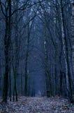 mörk skogväg Mörk sida av skogen royaltyfri fotografi