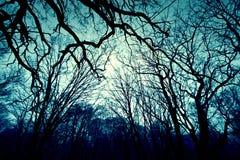 mörk skogvinter för bakgrund Royaltyfria Foton