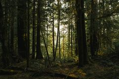 Mörk skuggig skog arkivfoto