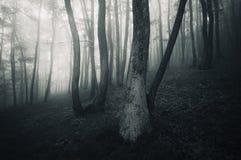 Mörk spöklik läskig skog Fotografering för Bildbyråer