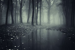 Mörk spöklik skog med mystisk dimma och sjön Royaltyfri Foto