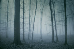 mörk spöklik skogplats royaltyfri bild