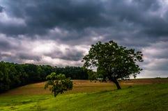 Mörk stormig himmel över träd och lantgårdfält i York County Arkivbild