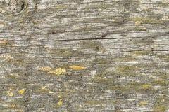 Mörk textur av gammalt naturligt trä med sprickor från exponering till solen och vind Fotografering för Bildbyråer