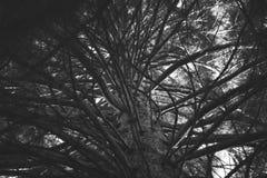 Mörk textur för trädfilialer Arkivfoto