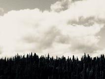 Mörk träd och himmel arkivbilder