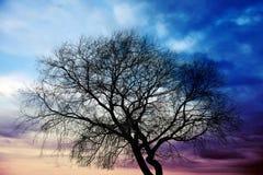 Mörk trädkontur ovanför färgrika stormiga moln Arkivbild