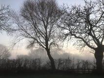Mörk trädlinje på en dimmig morgon Arkivfoto