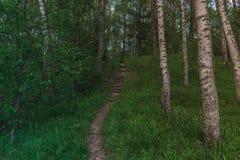 M?rk trappa i mitt av skogen som g?r upp med tr?d omkring arkivbild