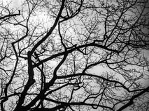 mörk tree Arkivbild