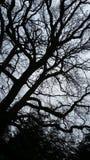 mörk tree Royaltyfri Fotografi