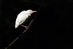 mörk white för fågel Arkivfoto
