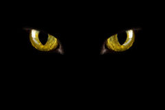 mörka ögon glödande s för katt Arkivfoton