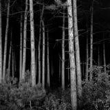 mörka djupa trän Royaltyfri Bild