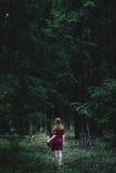 mörka djupa trän Arkivbilder
