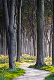 Mörka Forest Path Arkivfoton