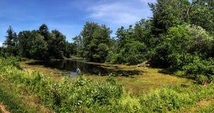 Mörka Forest Pond Arkivfoto