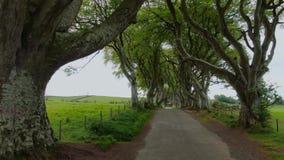 Mörka häckar av Stranocum i norr Irland arkivfilmer