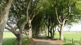 Mörka häckar av Stranocum i norr Irland lager videofilmer