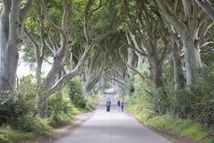 Mörka häckar, ståndsmässiga Antrim som är nordlig - Irland arkivfoto